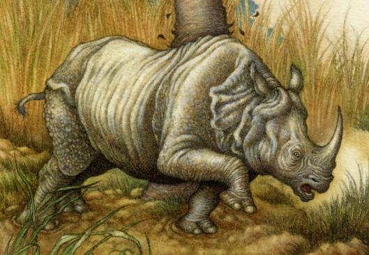 Rhinoceros2DetailPng-1000